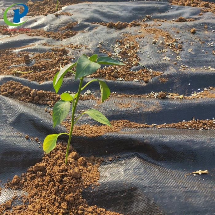 Pp Plastic Weed Barrier Landscape Fabric