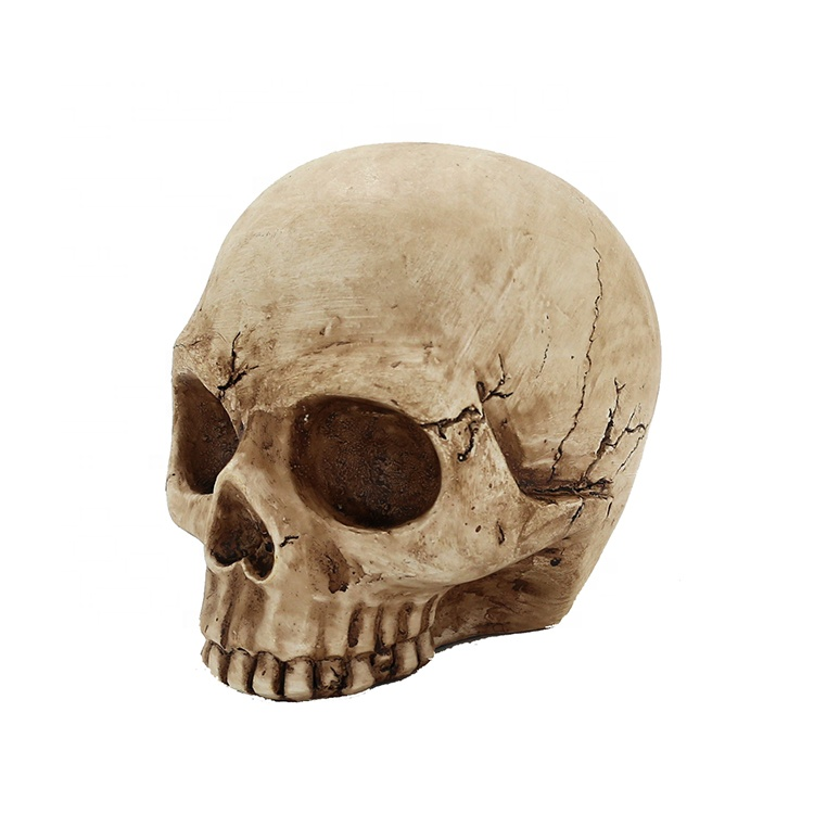 Holiday Halloween Polyresin Skull Head