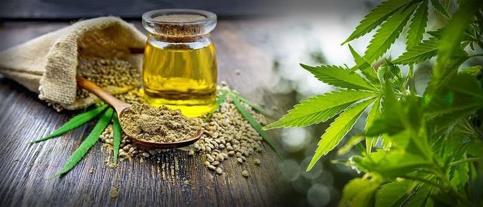 What is the current situation of CBD market in the United States? How to layout CBD industry?