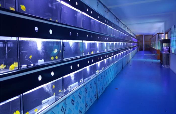 Ozone application for fish farming
