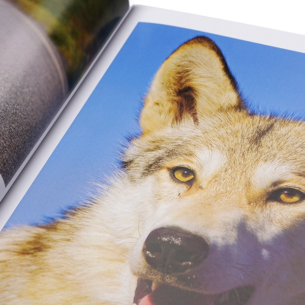 Cheap Sales Offset Printing Company On Demand wholesale Customized