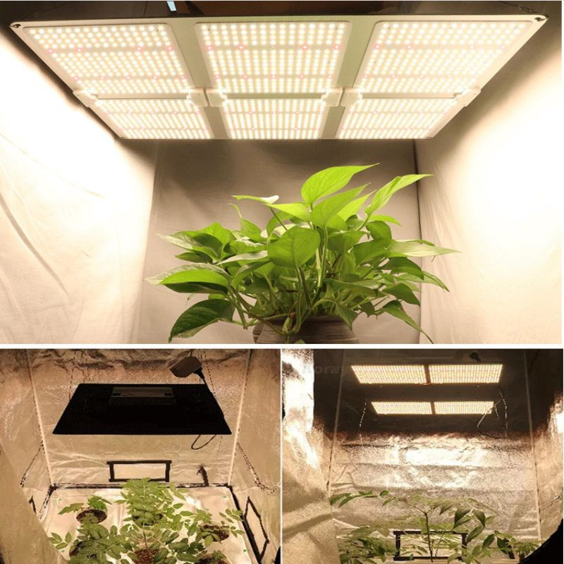 تنمو ضوء