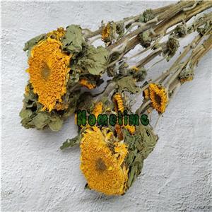 Dried Flowers Stems-Sunflower