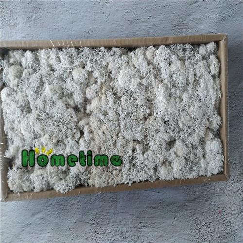 Sales Preserved Floral Arrangement-Moss, Buy Preserved Floral Arrangement-Moss, Preserved Floral Arrangement-Moss Factory, Preserved Floral Arrangement-Moss Brands