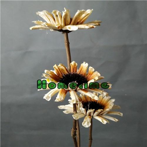 Dried Flower Stems-Sesamum indicum Flower