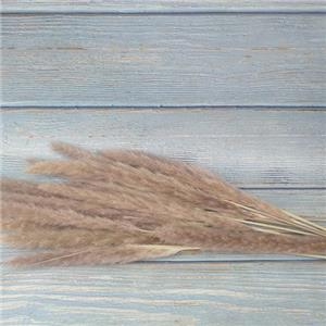 Dried Flowers Stems-Reed