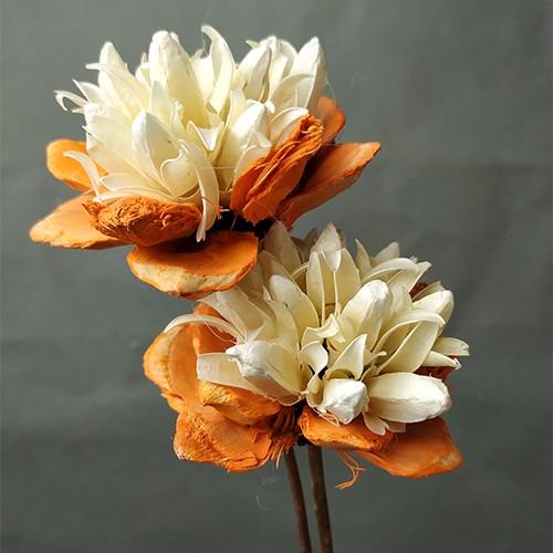 Dried Flower Stems-Yulan