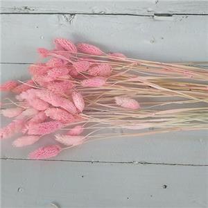 Dried Flowers Stems-Jewelweed
