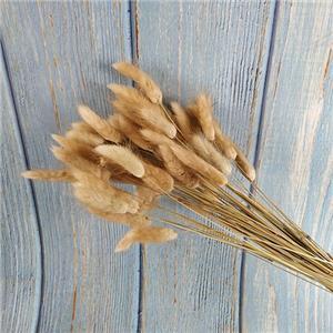 Dried Flowers Stems-Lagurus ovatus