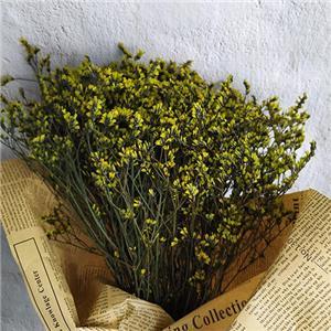 Preserved Flowers-Micranthemum Micranthemoides