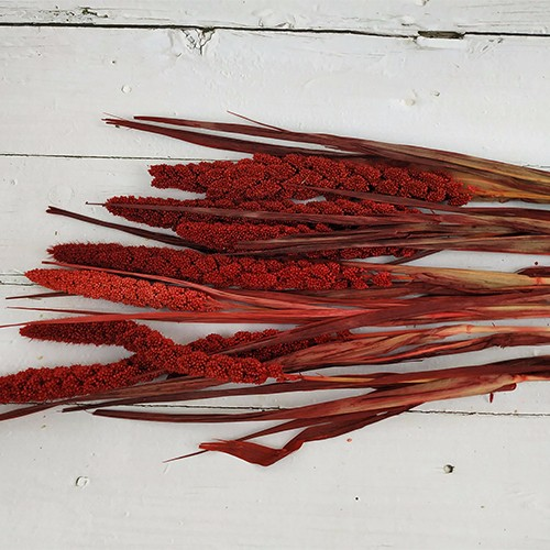 Dried Flowers Stems-Millet