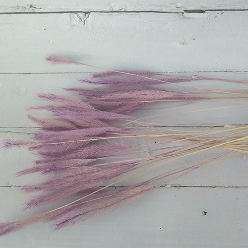 Dried Flowers Stems-Bristlegrass