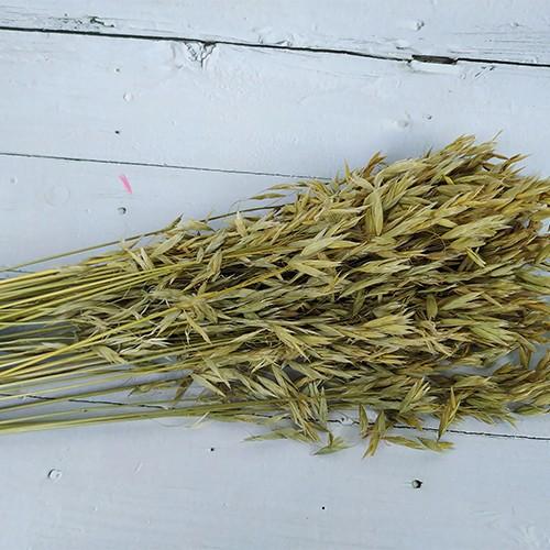 Dried Flowers-Oat