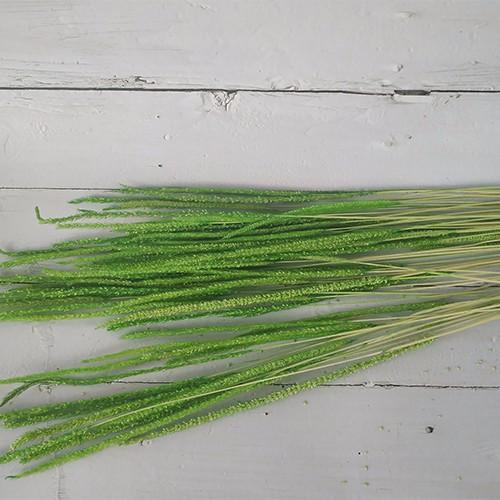 Dried Flowers Stems-Ryegrass
