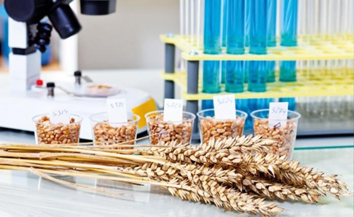 عملية تنظيف الحبوب بالطحن المسبق وماذا يجب معرفته