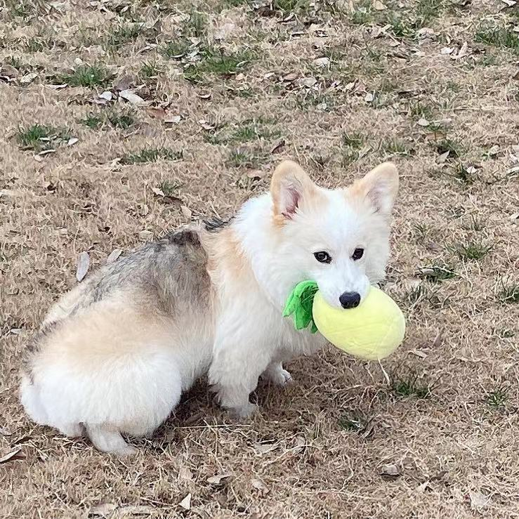 Cute Dog Toy with Squeakers
