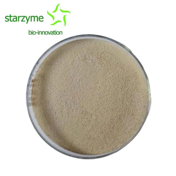 Clostridium Butyricum