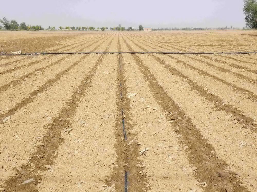 Aplicación de riego por goteo en tierras de cultivo.