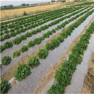 Película agrícola de 800 mm