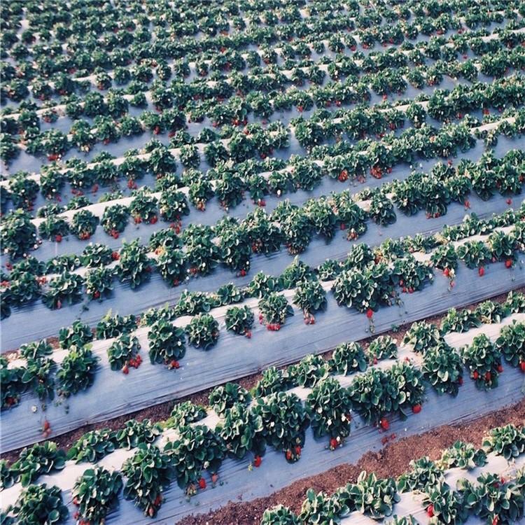 Comprar Película agrícola de 800 mm, Película agrícola de 800 mm Precios, Película agrícola de 800 mm Marcas, Película agrícola de 800 mm Fabricante, Película agrícola de 800 mm Citas, Película agrícola de 800 mm Empresa.