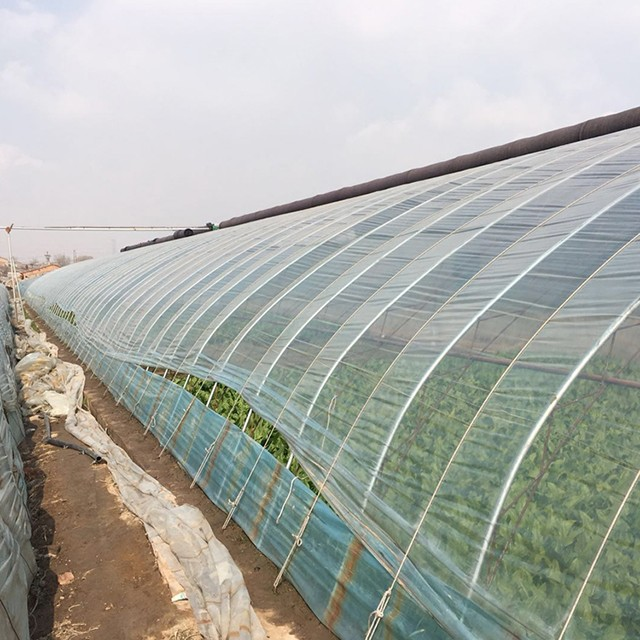 Vegetable Greenhouse Film Manufacturers, Vegetable Greenhouse Film Factory, Supply Vegetable Greenhouse Film