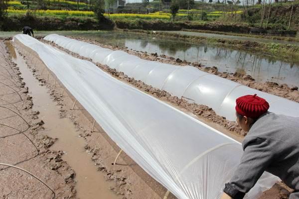 Película agrícola