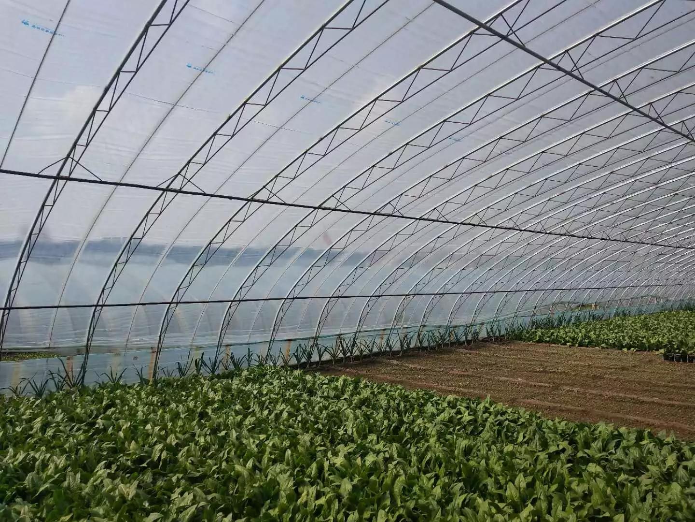 Película de invernadero vegetal