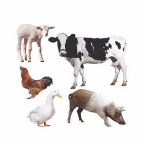 Concentrated Soy Protein For Animal Feed Manufacturers, Concentrated Soy Protein For Animal Feed Factory, Supply Concentrated Soy Protein For Animal Feed