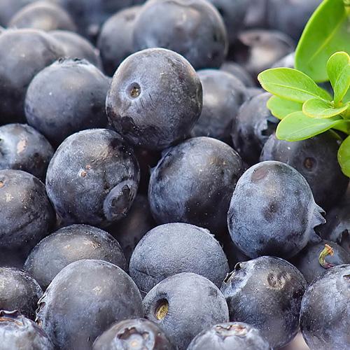 Intense blueberry aroma