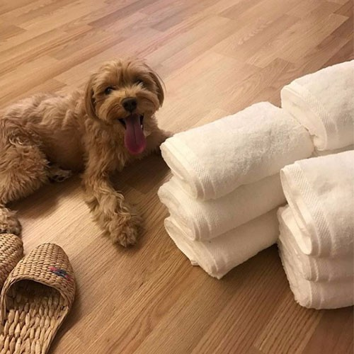 High quality White Hotel Plain Weave Towels Quotes,China White Hotel Plain Weave Towels Factory,White Hotel Plain Weave Towels Purchasing