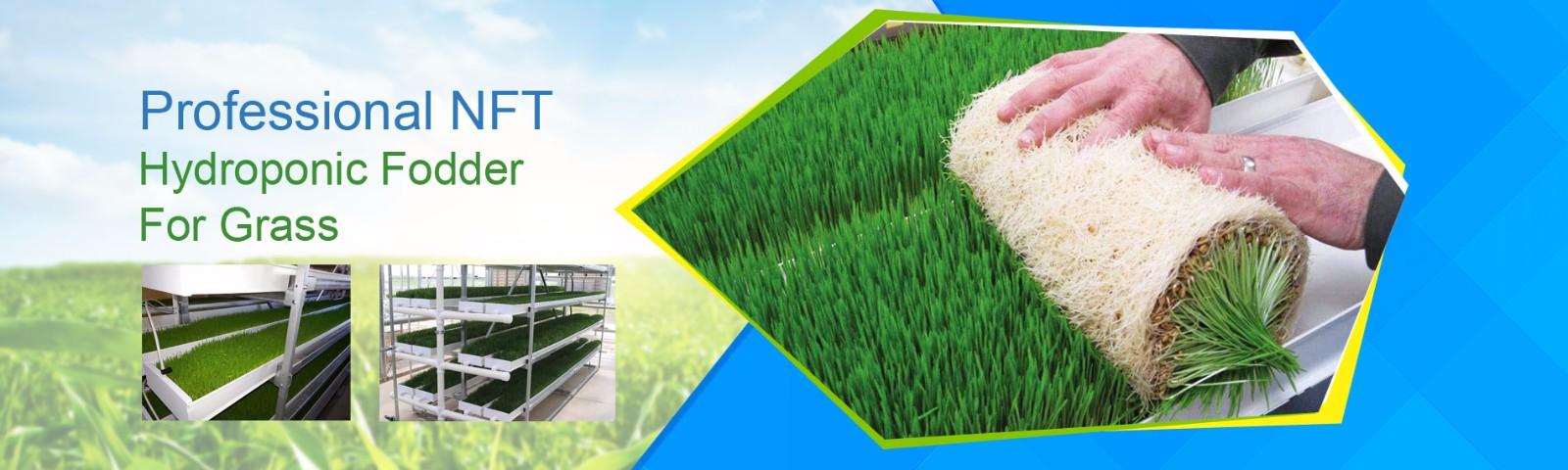 Hydroponic Fodder For Grass
