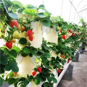 Hydroponic Vertical tower Systems for Strawberry
