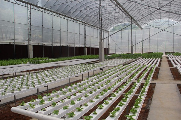 Greenhouse Hydroponic Cultivation- light requirement