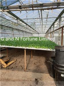 PVC channel nft hydroponics system
