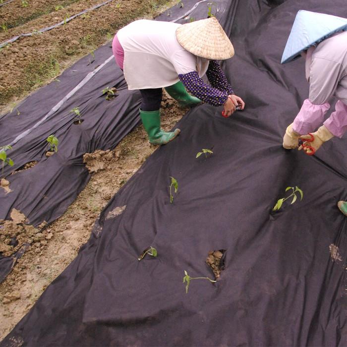 Black nonwoven Lanscape Fabric For Garden Cover