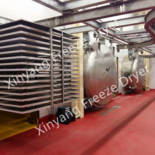 Large vacuum freeze drying plant for all berries production in the USA