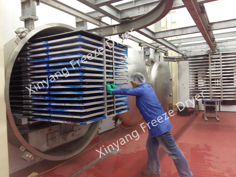 large freeze drying plant