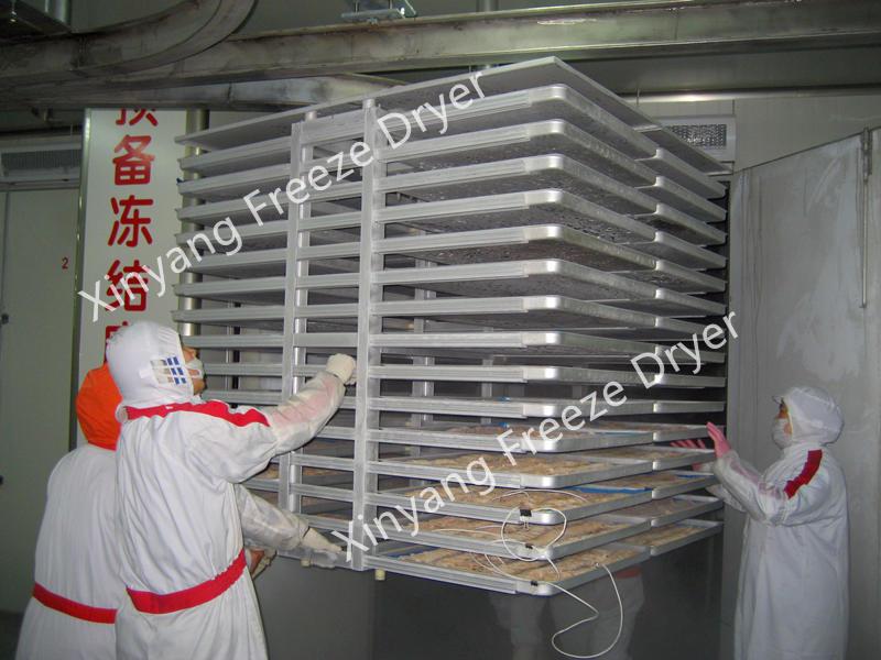 commercial vacuum freeze dryer
