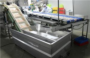 Why do we choose automatic shrimp peeling system?