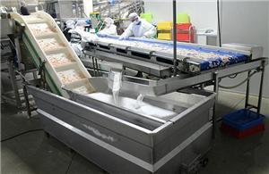 Why do we choose automatic shrimp peeling system?