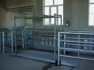 Living Cattle Weighing System