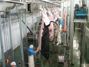 Carcass Dehinder Conveyor Manufacturers, Carcass Dehinder Conveyor Factory, Supply Carcass Dehinder Conveyor