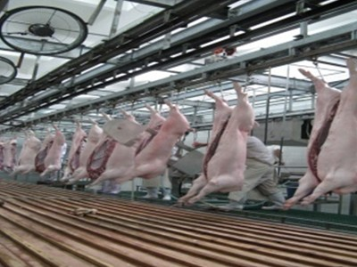 Carcass Processing Line