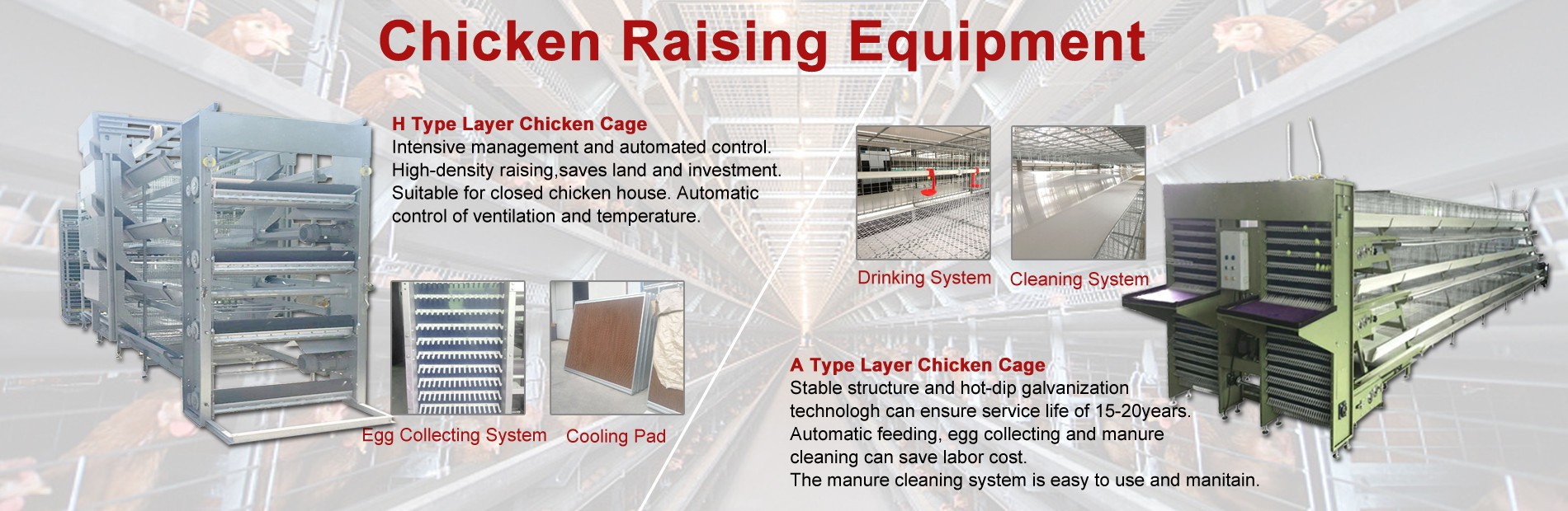 Chicken Raising Equipment