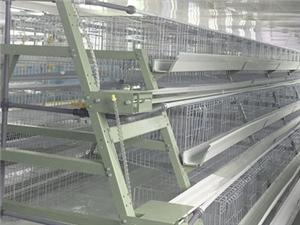 High quality A Type Layer Chicken Cage Quotes,China A Type Layer Chicken Cage Factory,A Type Layer Chicken Cage Purchasing