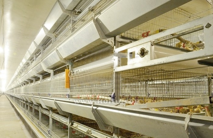 Maintenance of animal husbandry equipment