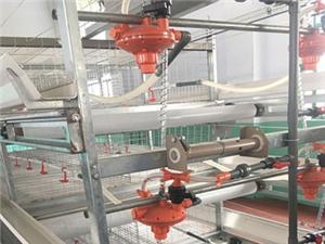 High quality Quail /chicken breeding cage Quotes,China Quail /chicken breeding cage Factory,Quail /chicken breeding cage Purchasing