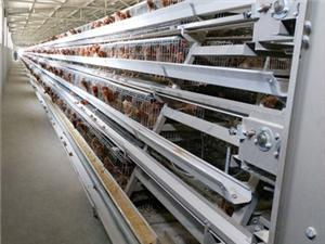 High quality chicken farm cage Quotes,China chicken farm cage Factory,chicken farm cage Purchasing