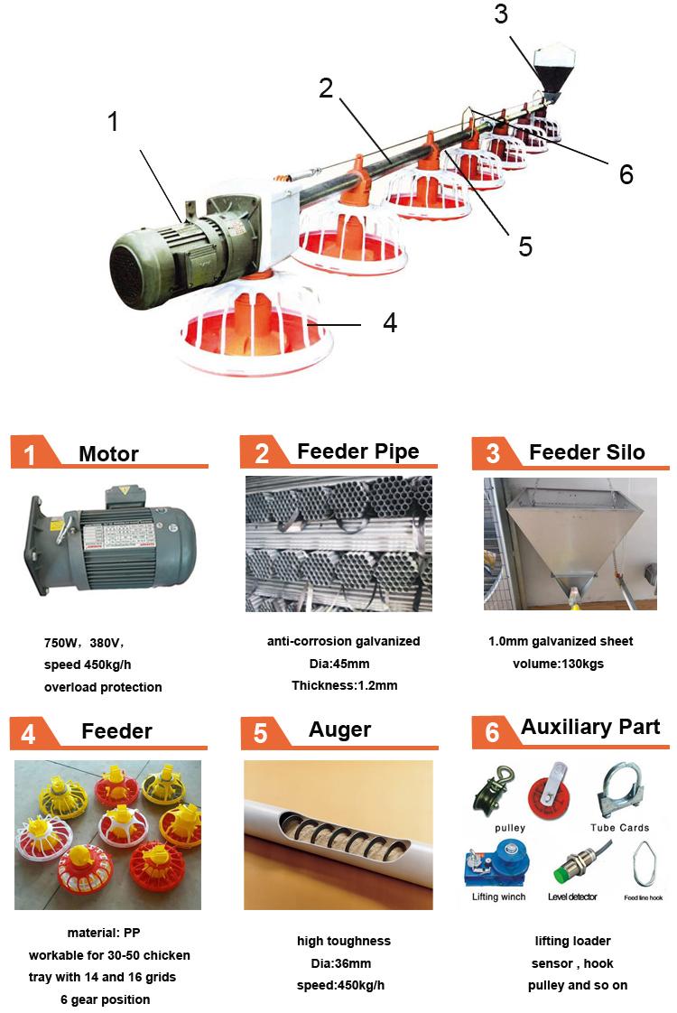 chicken feeding system