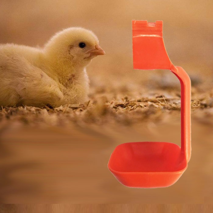 The requirement for ventilation in poultry farm